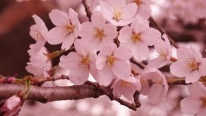 MŠ Úsměv květen